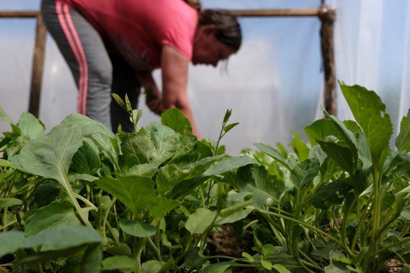Élelmiszerlavina: nehéz sorsú emberek kaptak vetőmagokat