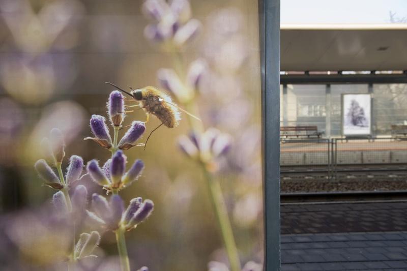 Perongalériát nyitottak az érdi vasútállomáson